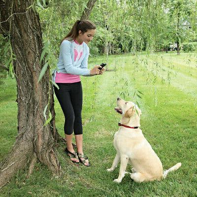 PetSafe and Wireless Stubborn Dogs